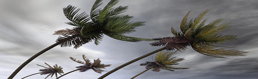 a stormy sky and palm trees blowing in the wind