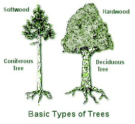 Types Of Insects In Trees Pictures To Pin On Pinterest
