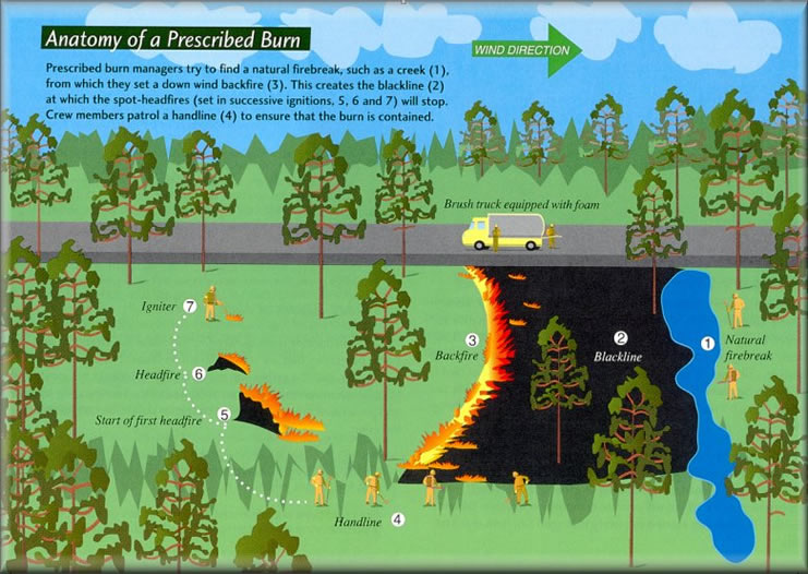Illustration: Anatomy of a Prescribed Fire