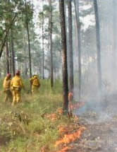 Picture: Point Washington State Forest controlled burn